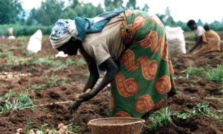 Terra arabile agli africani
