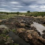 Terra e land grabbing: Tokyo pronta a ospitare attivisti e contadini
