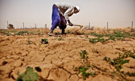 Land grabbing, no alla Del Monte in Kenya
