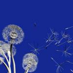 Rebirthing, respiro circolare e consapevolezza